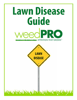 LawnDiseaseGuideImage
