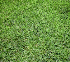 environmental benefits of lawn care