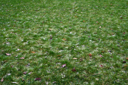 Frost Damage