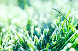 Frost in your Lawn