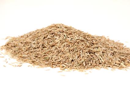Seeding Your Lawn