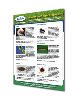 insect_guide_picture