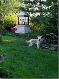 Joyce Vaughns Reynoldsburg Lawn