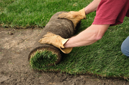 lawn care sodding