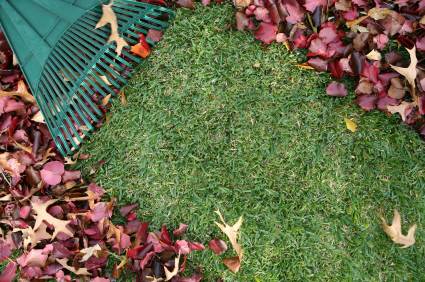 fertilize with leaves on lawn