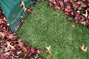 leaves in lawn