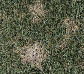 lawn disease