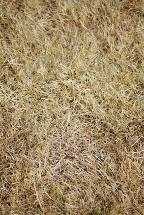 Lawn Thatch