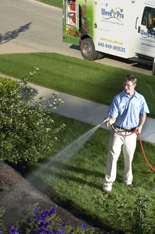 tree shrub care