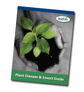 Weed Pro's Tree & Shrub Insect/Disease Guide
