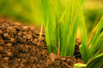 soil lawn care