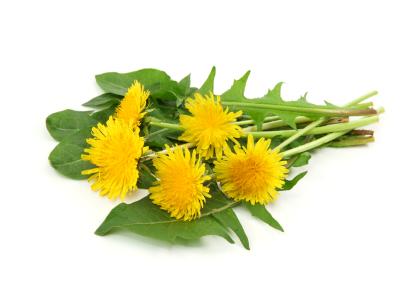 preventing dandelions