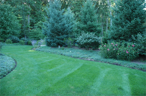 best lawn service prices
