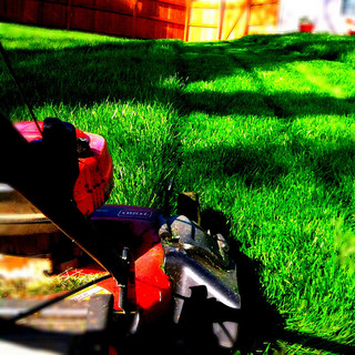 quality lawn care service