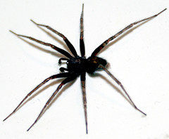Spider Ant Flea Tick Prevention