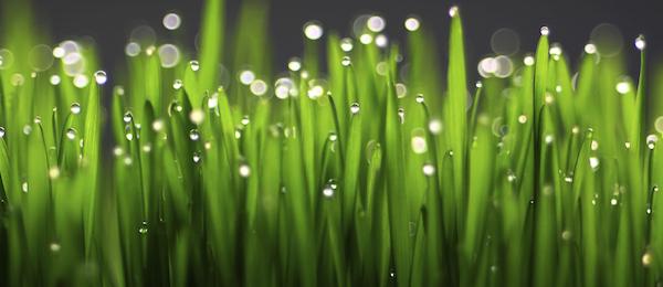 crabgrass_and_fertilizer_review