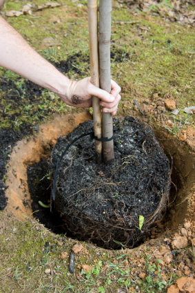 3 tips for planting a tree