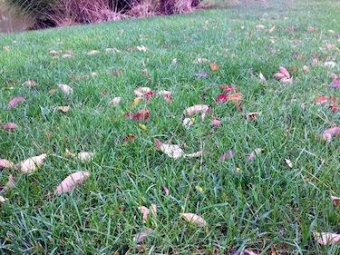 fall lawn fertilizing