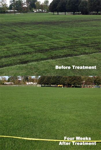 lawn repair before after one