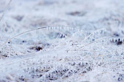 winter killing snow