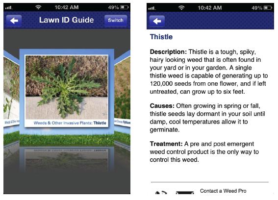 Lawn Problem ID Guide
