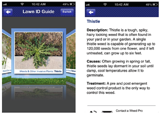 Lawn Problem ID Guide