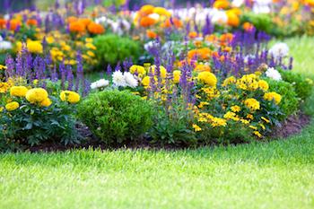 best lawn care companies avon ohio