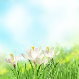 spring lawn care fertilizing