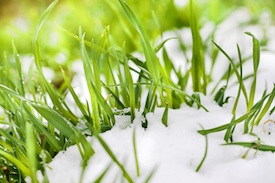 spring lawn care mistakes