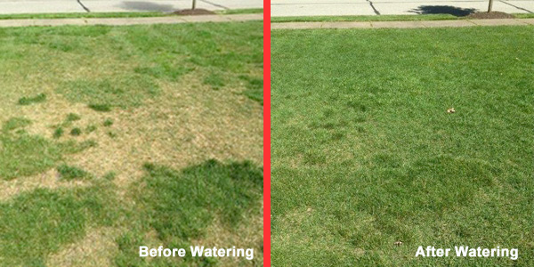 lawn care watering before after