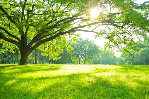 lawn-care-companies-oberlin-ohio