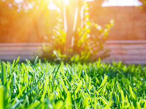 backyard-landscape-maintenance