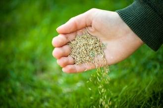best-grass-seed