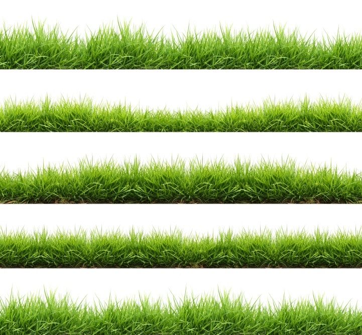 Advantages_Disadvantages_Grass_Types.jpg