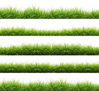 Advantages_Disadvantages_Grass_Types.jpg