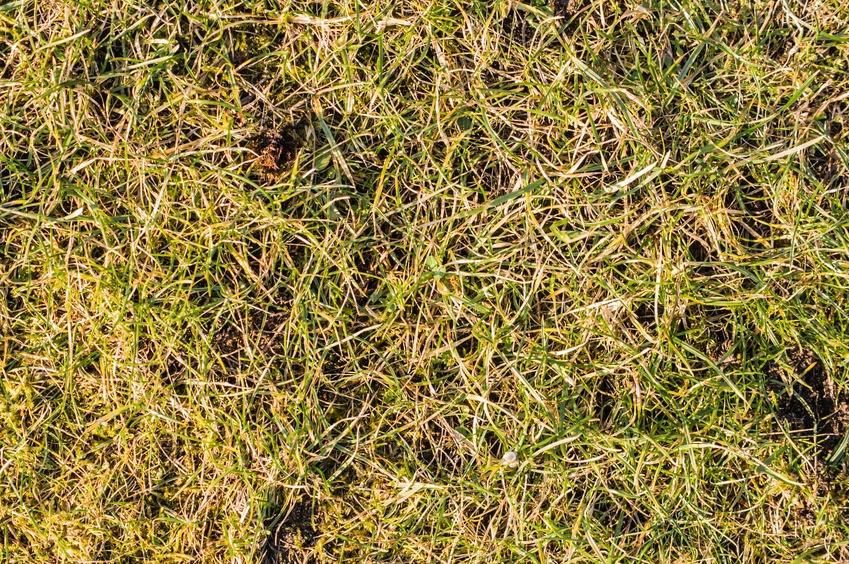 Beware_Of_Lawn_Rust.jpg