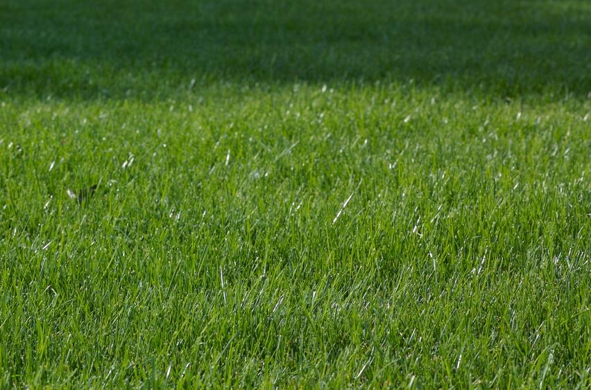 Common_Lawn_Diseases.jpg