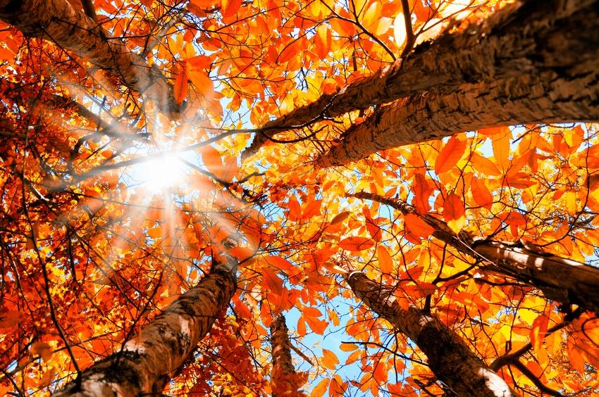 Fall_Backyard_Bucket_list.jpg