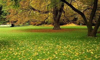 Fall_Lawn_Care
