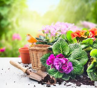 Five_Innovative_Spring_Flower_Ideas.jpg