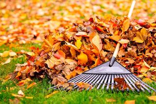 Leaf_Raking_Tips.jpg