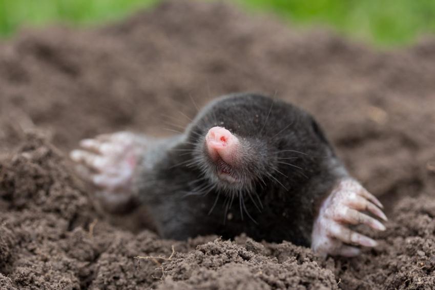 Moles_The_Hole_Story.jpg