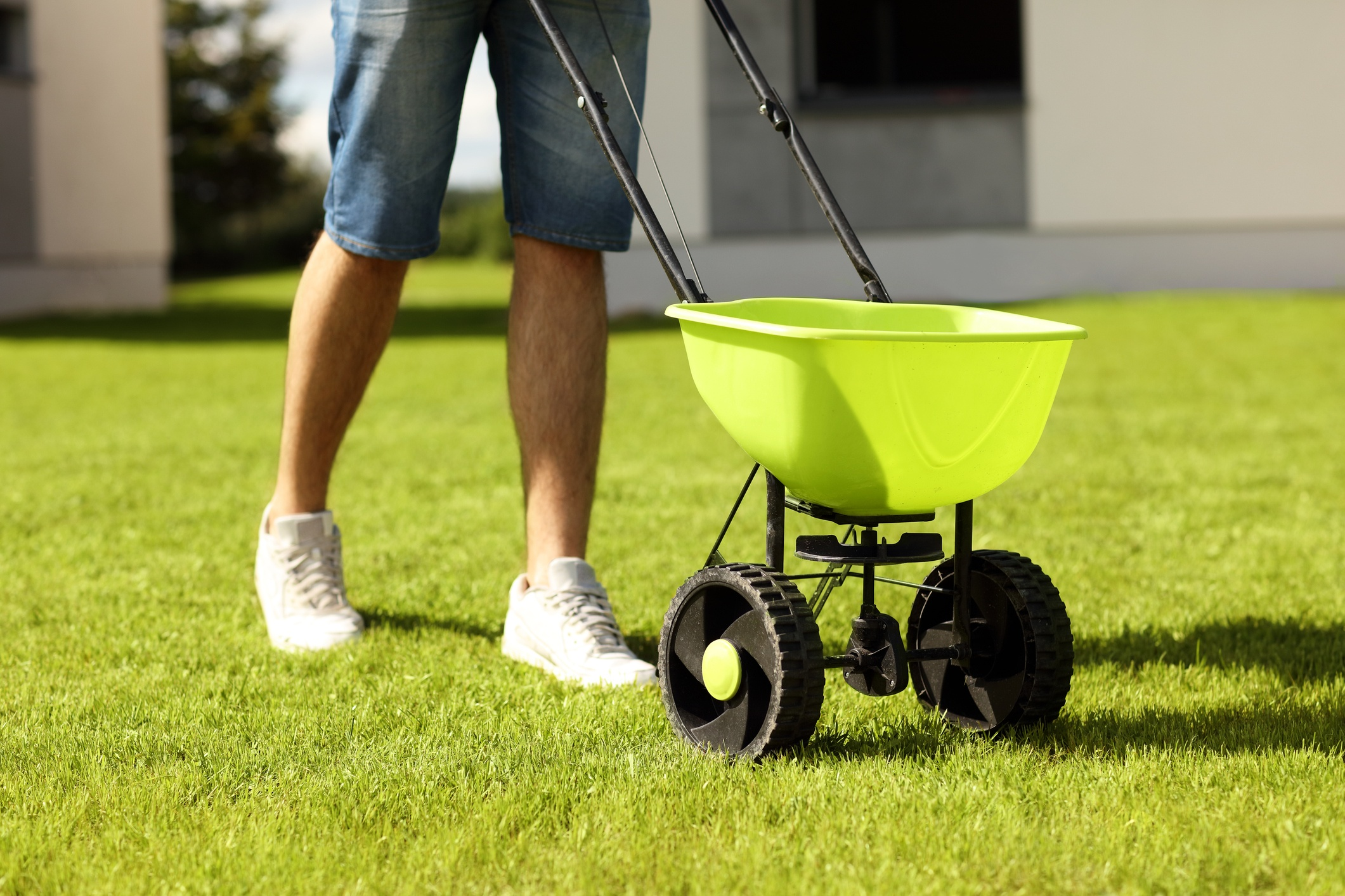 Spring-Lawn-Fertilizer.jpg