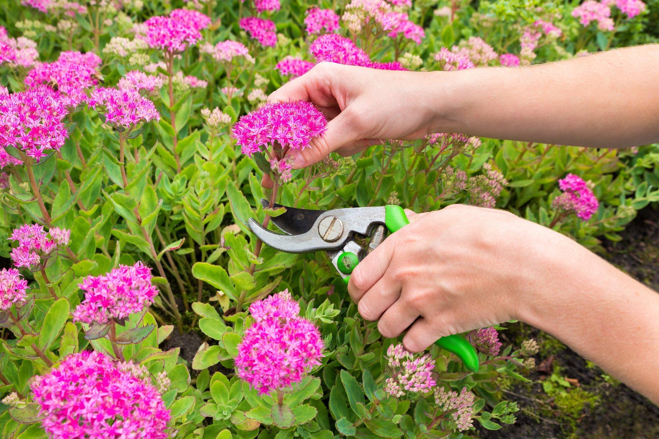 Spring-planting-sedum.jpg