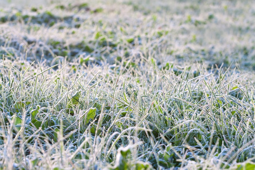 Steps_To_Waking_Up_Your_Lawn_After_Winter.jpg