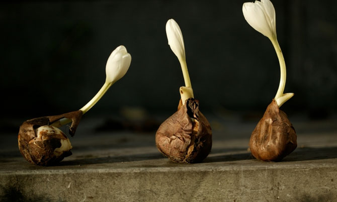 Time-To-Plant-Spring-Blooming-Bulbs.jpg