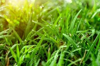 Why_Is_Turf_Grass_So_Amazing.jpg