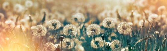 early-season-lawn-weeds.jpg