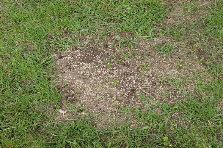 grass-seed-bare-spots-1.jpg