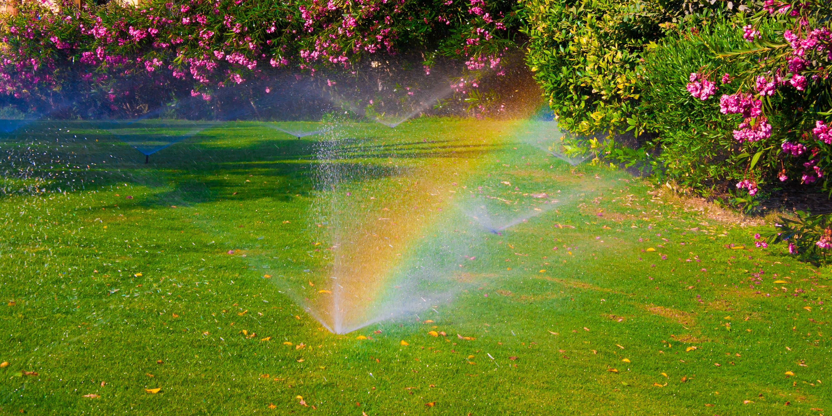 june-watering-guide-how-much-should-i-water.jpg